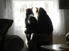 Molly & Bullwinkle