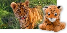 I love animals and groups who try to protect them and the natural world. WWF
