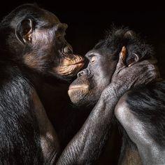 Hoe slim moet je zijn om dieren te begrijpen? - NRC