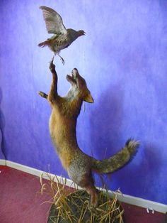 Fox and fowl PLAY time