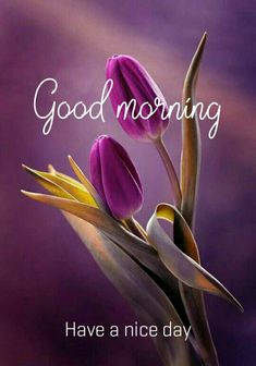 Beautiful good morning images with flowers Good Morning Greetings Images, Good Morning Friends Images, Very Good Morning Images, Good Morning Greeting Cards, Good Morning Images Flowers, Good Morning Roses, Good Morning Image Quotes, Morning Quotes, Good Morning My Friend