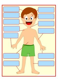 Gabarit 1 - Les parties du corps humain à placer