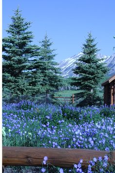 Gunnison. Colorado. Do you have mountains of books to #read? Conquer them with turbochargedreading.blogspot.com