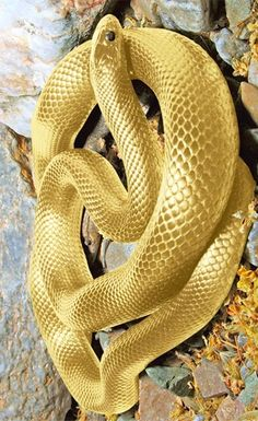 This snek may very well be the coolest, shiniest snek every Pretty Snakes, Cool Snakes, Colorful Snakes, Beautiful Snakes, Rare Animals, Animals And Pets, Beautiful Creatures, Animals Beautiful, Serpent Animal