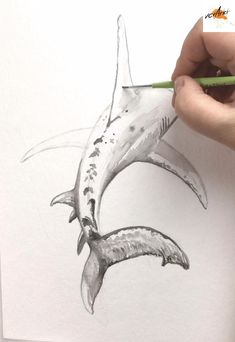 Cool Art Drawings, Pencil Art Drawings, Art Drawings Sketches, Drawings Of Sharks, Watercolor Fish, Watercolor Animals, Animal Sketches, Animal Drawings, Whale Sketch