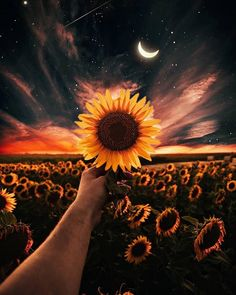 Sunflower wallpaper by - - Free on ZEDGE™ Cute Wallpaper Backgrounds, Pretty Wallpapers, Tumblr Wallpaper, Galaxy Wallpaper, Aesthetic Iphone Wallpaper, Nature Wallpaper, Aesthetic Wallpapers, Landscape Wallpaper, Sunflower Photography