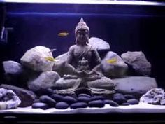 29 Gallon African Cichlid Tank this is soo cool