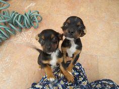 Mis dos lindos cachorros,TITO Y LUNA.