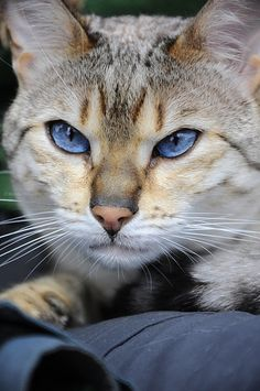 """Nothing is quite as scrutinizing as a cat's stare."" --Author Unknown"
