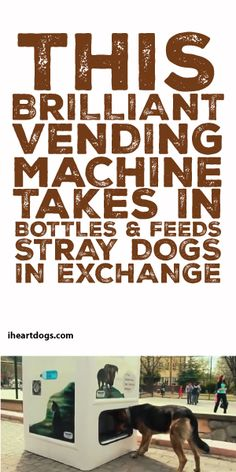 This Brilliant vending Machine Takes In Bottles & Feeds Stray Dogs In Exchange!!