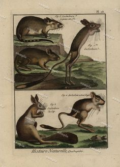 Original Antique Natural History Hand colored by Printvilla4you