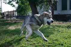 Animal Staff (Lola)  Fundación Cerezales