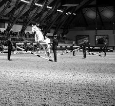 Equitation académique #cadrenoir #jumping #gala #chevalannonce