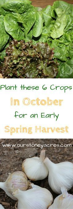 October Planting Guide #3 - As the weather cools and you start putting your garden to bed for the winter use this October planting guide to get a few seeds in your garden for spring harvest.