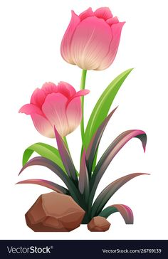 Pink tulips on white background Royalty Free Vector Image Flowery Wallpaper, Flower Phone Wallpaper, Tulip Flower Drawing, Flower Art, Cartoon Flowers, Beautiful Rose Flowers, Beautiful Nature Wallpaper, Flower Clipart, Pink Tulips