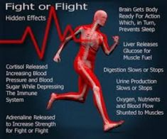 9 Best Fight Or Flight Response Images Neuroscience Fight Or