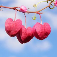 hearts flowers