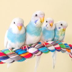 Kevin's Birds on Instagram