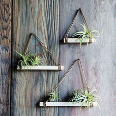 Don't you just love air plants? They are just the most adorable plants are they are of the easiest plants to care for too! Here are Gorgeous Air Plant Display ideas perfect for any home! Air Plant Display, Plant Decor, Hanging Air Plants, Indoor Plants, Potted Plants, Hanging Tv, Porch Plants, Indoor Herbs, Tomato Plants