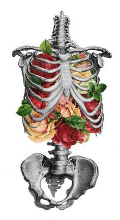 Creative Anatomy, Love, Creativity, Illustration, and Skeleton image ideas & inspiration on Designspiration Flowers Illustration, Illustration Art, Botanical Illustration, Medical Illustration, Inspiration Art, Art Inspo, Anatomy Art, Anatomy Bones, Gcse Art