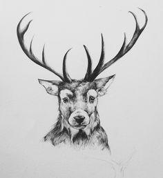 Deer,  black and white - sketch