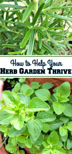 Wondering how to help your herb garden thrive? I am going to share some herb gar. - Wondering how to help your herb garden thrive? I am going to share some herb gardening tips they wi - Organic Gardening, Types Of Herbs, Hydroponic Gardening, Patio Herb Garden, Herbs, Plants, Herb Garden, Garden Types, Gardening Tips
