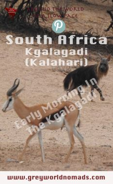 The Kgalagadi Transfrontier Park boasts of wildlife. Herds of antelopes provide food for predators, both to be watched frequently at the waterholes. Early Retirement, Retirement Planning, Retirement Decorations, Visit South Africa, Wildlife Safari, Beach Holiday, Africa Travel, Early Morning, 3d Printer