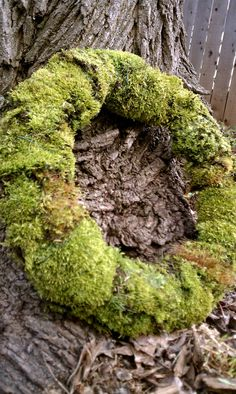 Moss wreath. The beauty in nature <3