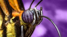 Behind the Scenes: Butterfly Portrait | Macro and Cheese