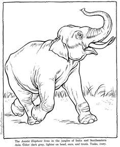 컬러링북 도안 알파벳 동물 재미있게 색칠해보세요 : 네이버 블로그