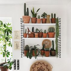 Home Decoration For Living Room Bedroom Plants Decor, Plant Decor, Feng Shui, Living Vintage, Decorative Planters, Country Interior, Interior Plants, Scandinavian Living, Cacti And Succulents