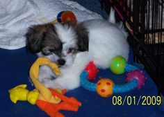 Robby as a pup