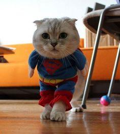 Super gato