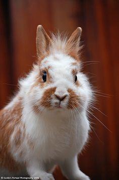 Een konijn