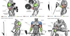 Liked on Pinterest: Biceps e Braquial