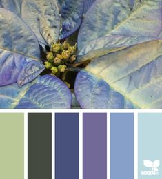 Poinsettia Blues - http://design-seeds.com/index.php/home/entry/poinsettia-blues