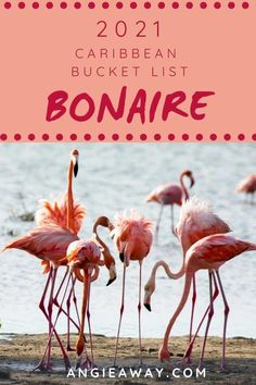Bonaire is part of the Dutch Caribbean, a handful of island nations that once comprised the Netherlands Antilles. Visiting Bonaire is like traveling to any other country – you go through customs