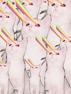 cats with fricken laser beams collage