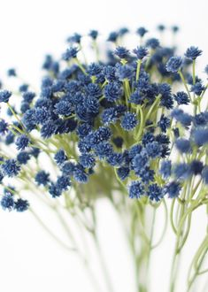 Find the best artificial baby's breath for your DIY wedding flower arrangements. Add lasting color to your wedding arrangements with hassle-free faux flowers. Dark Blue Tall x Wide Wide Blooms 7 Stems, Wide Flower Clusters Soft Plastic Wired Stems Blue Flower Arrangements, Blue Flowers Bouquet, Purple Bouquets, Light Blue Flowers, Wedding Arrangements, Bridesmaid Bouquets, Peonies Bouquet, Brooch Bouquets, Bridal Bouquets