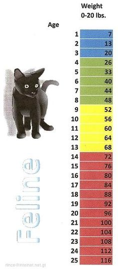 29 Best Pet Aging Charts Images On Pinterest Cat Ages Cat Years