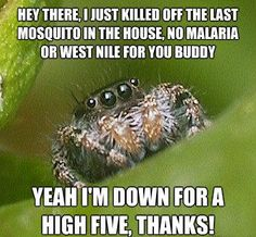 The Sad World Of The Misunderstood House Spider @Sarah Cameron #7