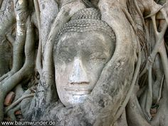 This Buddha stands in Ayutthaya (Thailand) in the vicinity of the entrance of the temple WAT Mahathat.