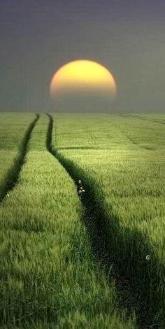 Beautiful sunrise green nature