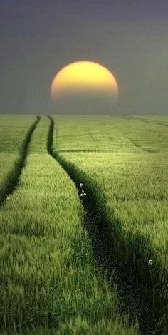 Beautiful sunrise green nature