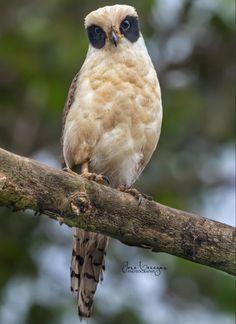 Pretty Birds, Love Birds, Beautiful Birds, Beautiful World, Birds Of Prey, Bird Feathers, The Darkest, Cute Animals, Wildlife