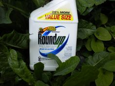 The European Commission is proposing the re-approval of the controversial active ingredient glyphosate, which is used as a herbicide among other applicatio It's carcinigenic and kills bees. shame on the EU.