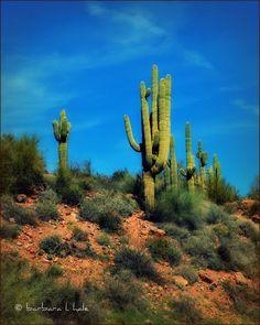 Saguaro National Forest in Arizona