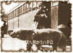 Photo of the real Hachi. Japanese Akita, Japanese Dogs, Hachi A Dogs Tale, Japanese Dog Breeds, A Dog's Tale, Hachiko, Shibuya Tokyo, Akita Dog, Loyal Dogs