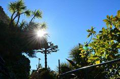 Les balades de Slowgarden / Slowgarden's rides Eze Exotic garden, south France / photo by Slowgarden