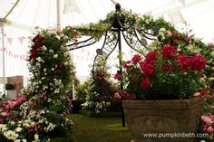 A beautiful rose arbour created by Peter Beales Roses inside The Festival of Roses Marquee at the 2015 RHS Hampton Court Palace Flower Show.  This beautiful display was awarded a Silver-Gilt Medal by the RHS Judges.